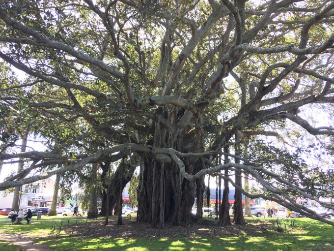 nz-tree